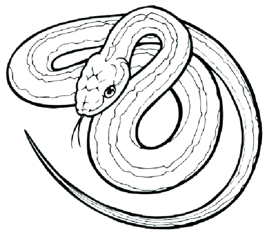 878x769 Anaconda Coloring Page Anaconda Coloring Pages Rattlesnake
