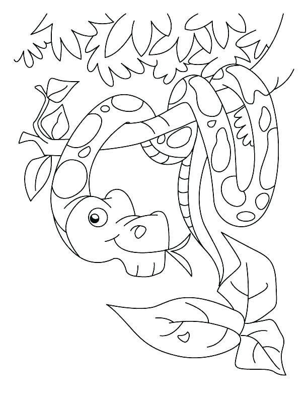 612x792 Anaconda Coloring Page Rattlesnake Coloring Page Anaconda Coloring