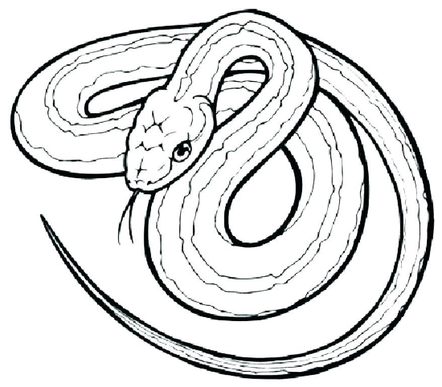 878x769 Snake Coloring Pages Snake Coloring Pages For Kids Anaconda