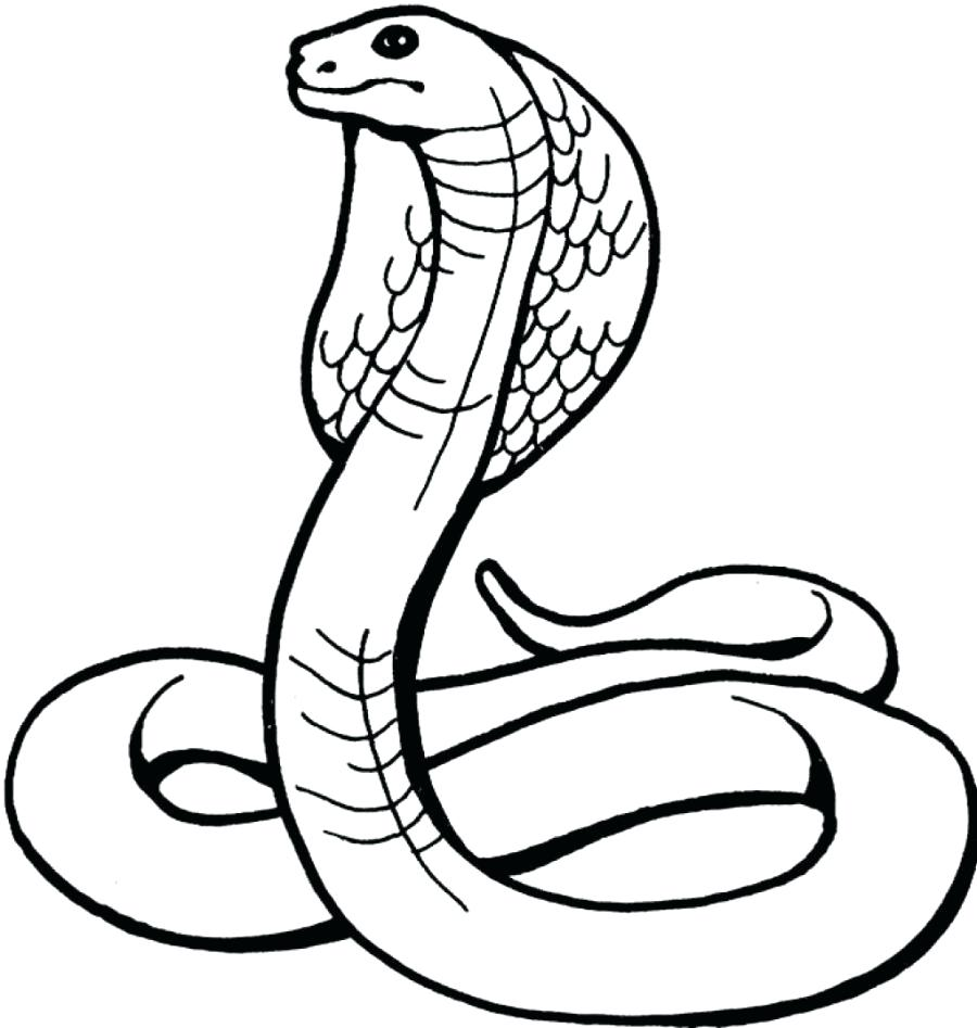 900x947 Coloring Pages Snake Coloring Pages For Kids Reptiles Realistic