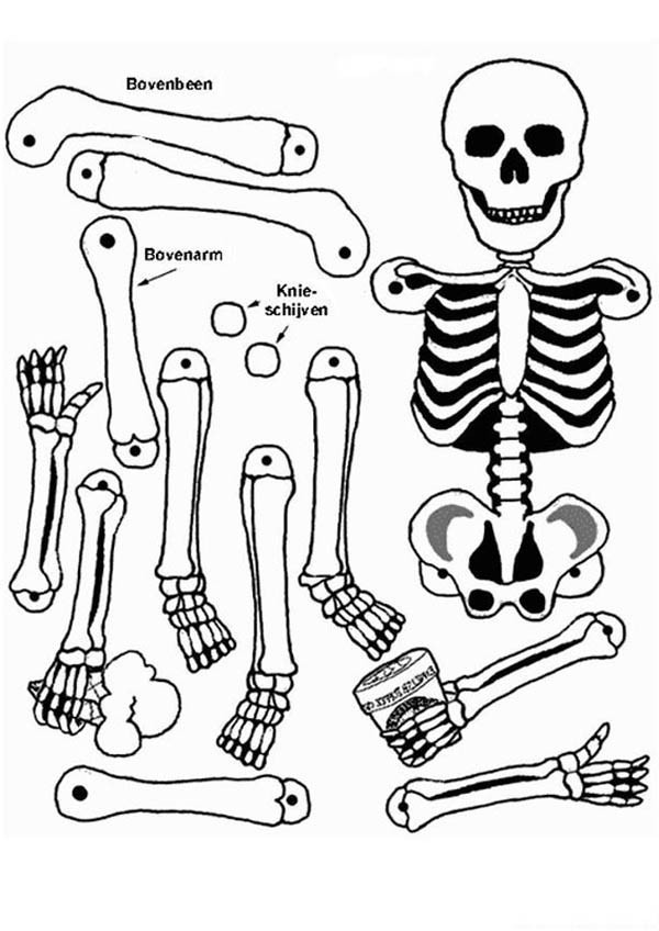 Anatomical Coloring Pages
