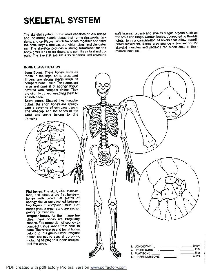 728x942 Anatomy Coloring Pages Skull Skeleton Anatomy Colouring Pages
