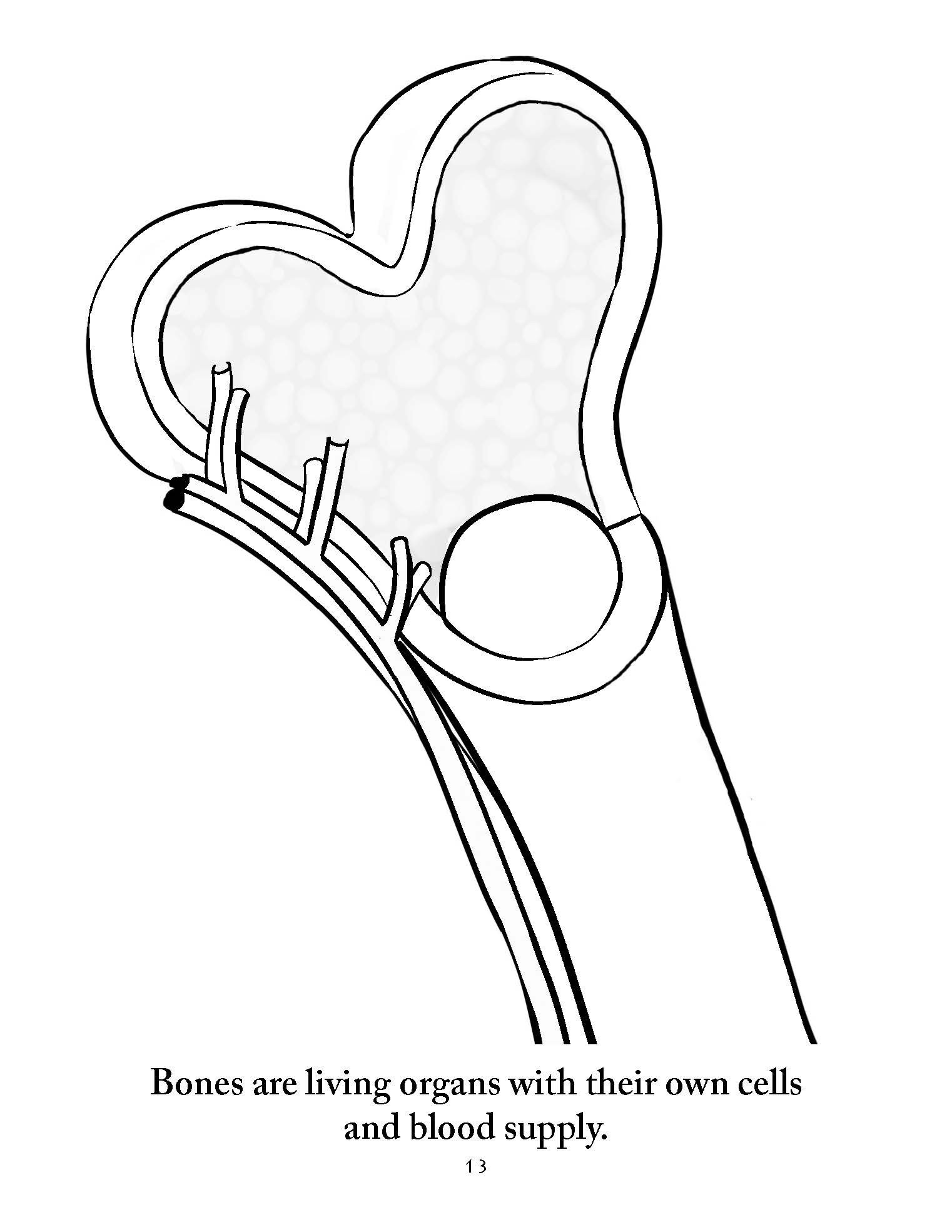 1522x1969 Anatomy Coloring Pages