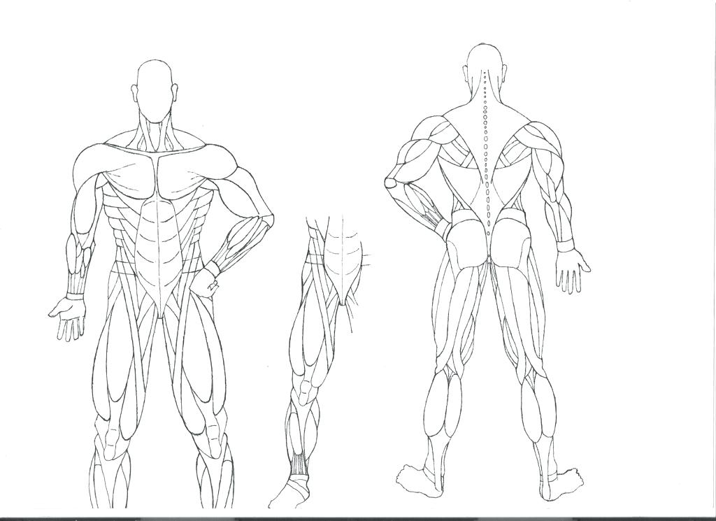 1024x745 Anatomy And Physiology Coloring Pages Anatomy Coloring Pages