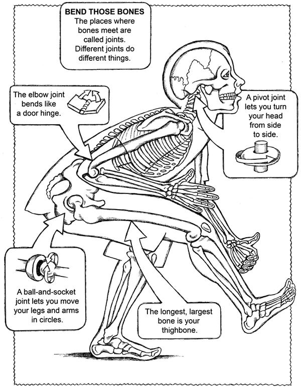 Anatomical Coloring Pages at GetDrawings.com | Free for personal use ...