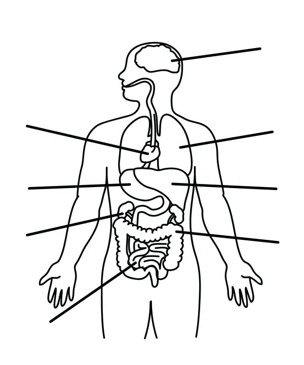 600x720 Anatomy Coloring Pages Human Anatomy Organs Coloring Pages Bulk