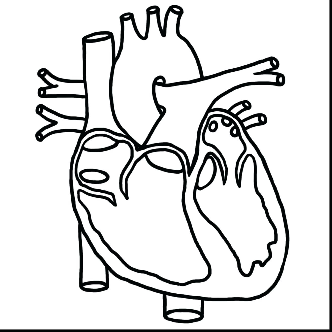 1320x1320 Human Heart Coloring Human Brain Coloring Page Pages Heart