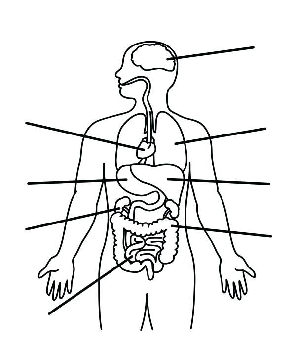 600x720 Human Heart Coloring Human Coloring Page Human Anatomy Organs