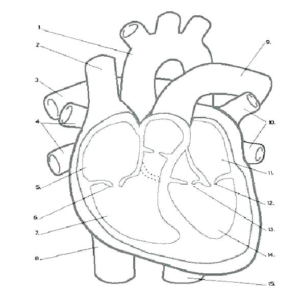 600x600 Human Heart Coloring Pages Human Heart Coloring Pages Heart