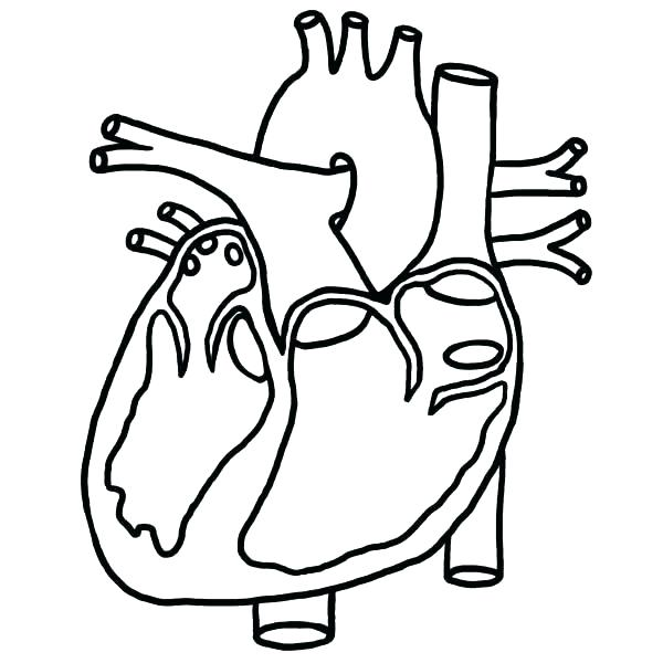 600x600 Human Heart Colouring Pages Printable Coloring Circulatory System