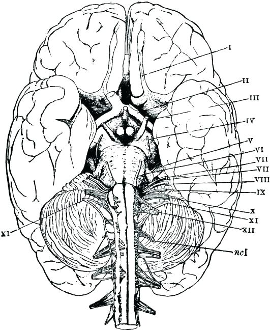 531x650 Anatomy Physiology Coloring Pages Lovely Anatomy