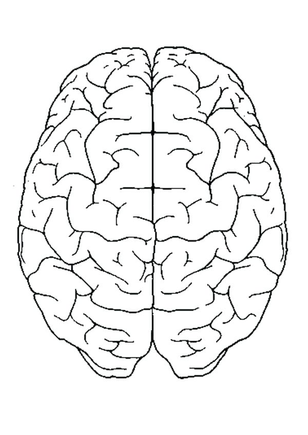 600x848 Anatomy Coloring Pages Heart Brain Anatomy Coloring Pages Brain