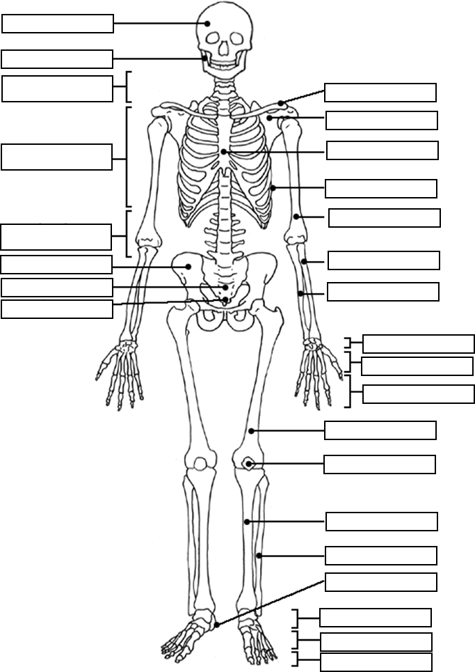 683x965 Free Printable Human Anatomy Coloring Pages