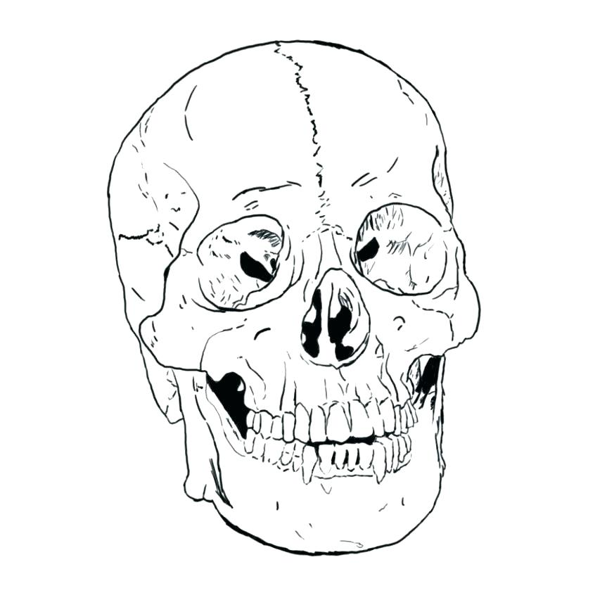 863x863 Skull Coloring Pages Anatomy Coloring Pages Free Printable Skull
