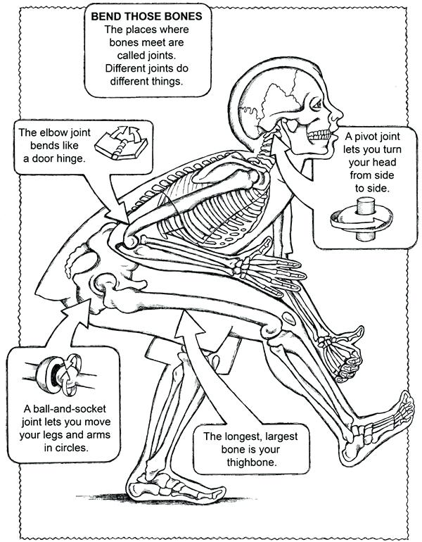 600x770 Anatomy And Physiology Coloring Pages Free Anatomy Physiology