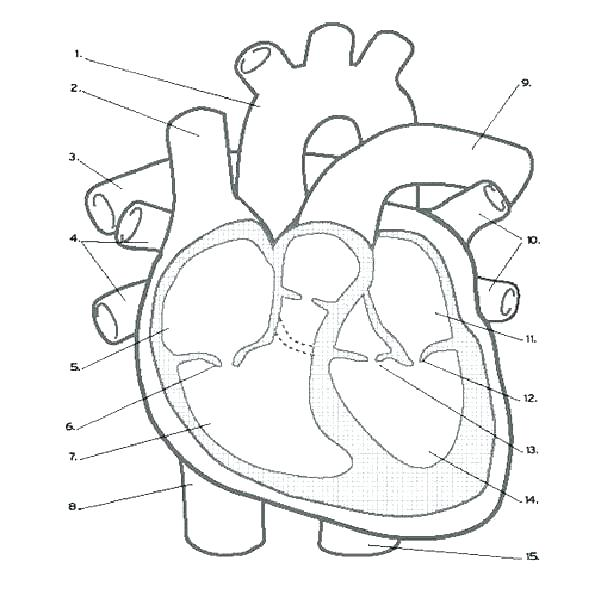 600x600 Anatomy Coloring Book Online Anatomy Coloring Pages Heart Anatomy