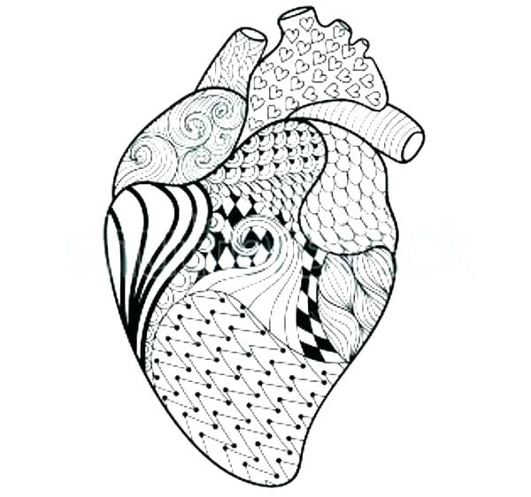 600x562 Human Anatomy Coloring Pages Free Printable Anatomy Coloring Pages