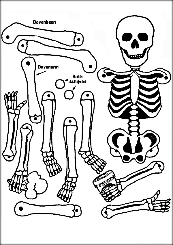 600x848 Coloring Pages And Coloring Books Anatomy Coloring Book For Kids