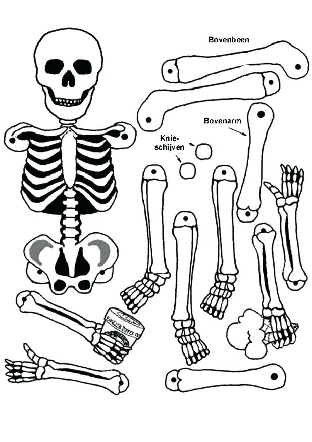 618x874 Free Printable Human Anatomy Coloring Pages Anatomy Coloring Book