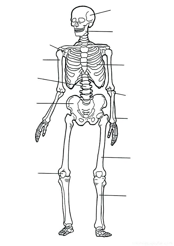 566x800 Anatomy Muscle Coloring Pages Free Printable Anatomy Colouring