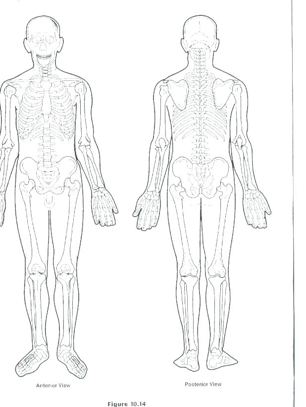 618x821 Excellent Glamorous Body Systems Coloring Pages Online Anatomy