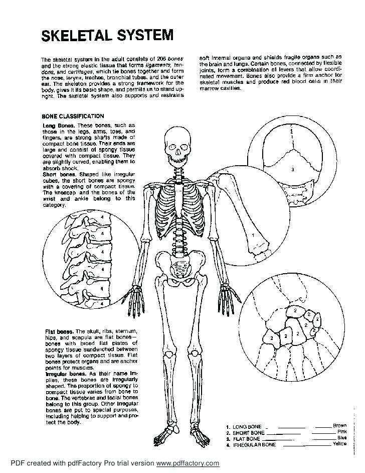 728x942 Human Muscles Coloring Free Printable Anatomy Pages In Plan