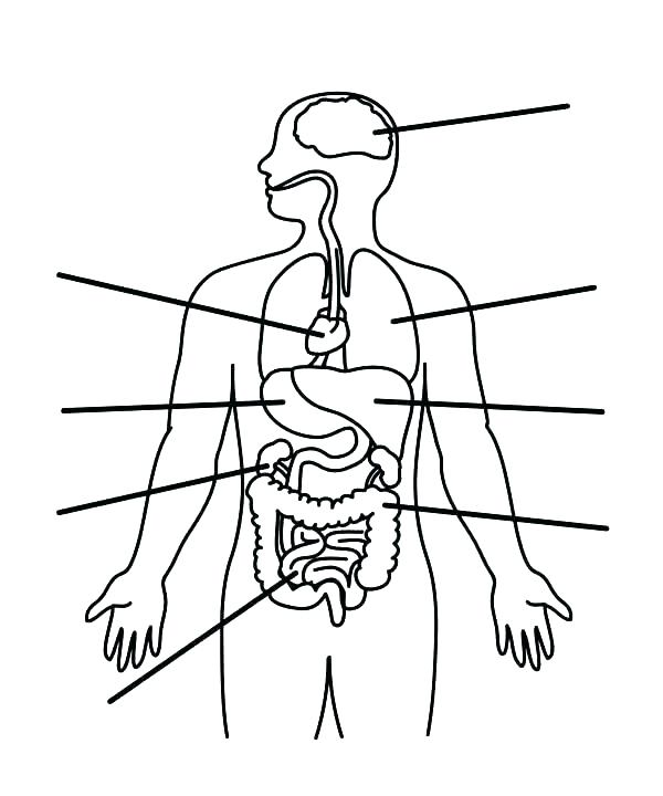 600x720 Anatomy Coloring Page