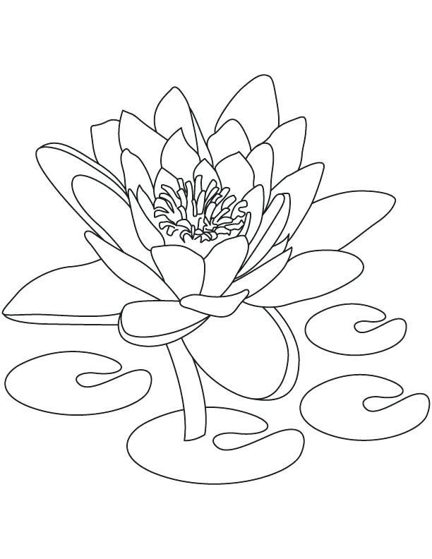 612x792 India Coloring Pages National Flower Of Coloring Page Free