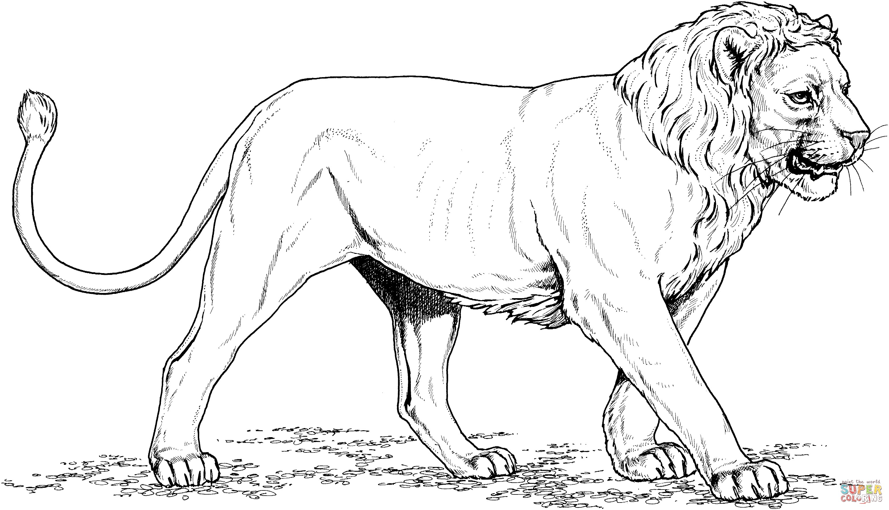 3088x1772 Inspiration India Coloring Pages Printables Copy Asiatic Lion Gir