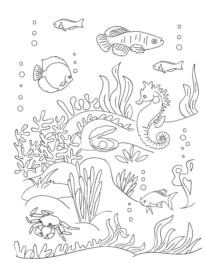 675x900 Seaweed Coloring Pages Sea Anemone Coloring Page Seaweed Coloring