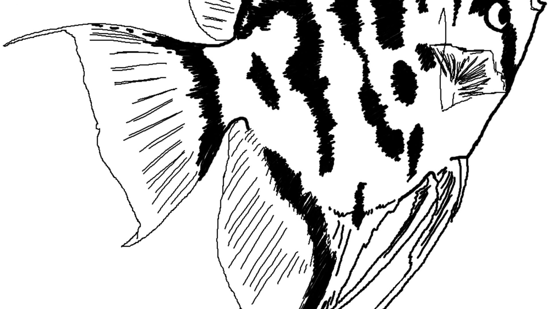 1920x1080 Angelfish Zentangle Coloring Page Imposing Flame Angel For General