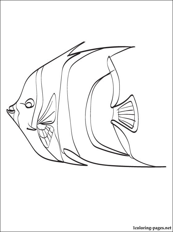 560x750 Angelfish Coloring Page Coloring Pages