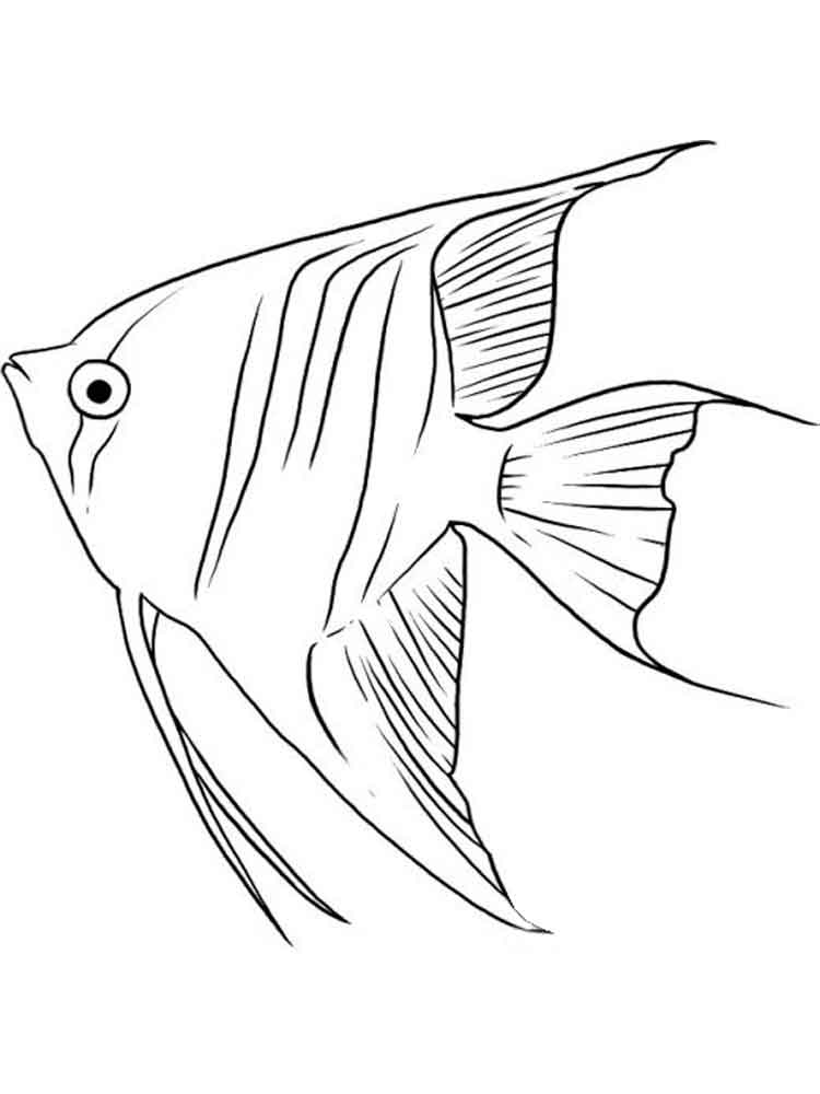 750x1000 Angelfish Coloring Pages Download And Print Angelfish Coloring Pages