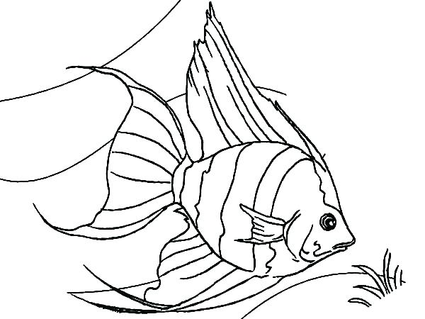 600x450 Clown Fish Coloring Page Coloring Page Fish Picturesque Design