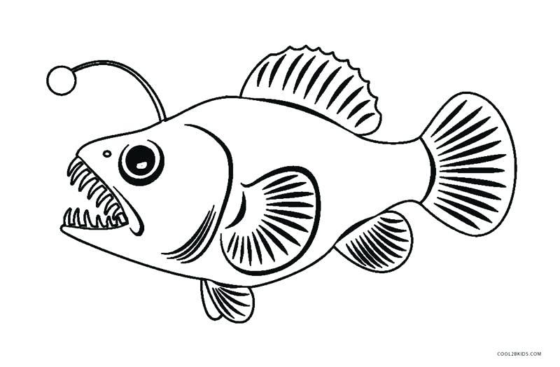 800x524 Fish Coloring Page Angler Fish Coloring Page Angel Fish Coloring