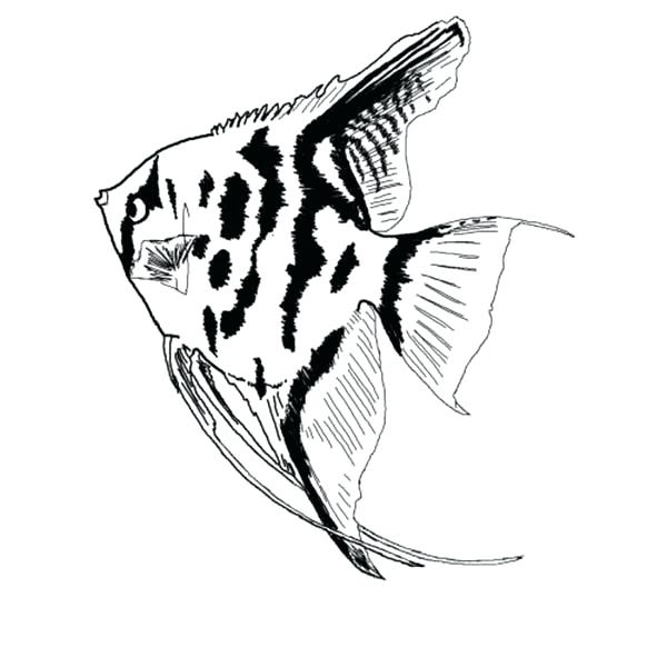 600x600 Fish Coloring Pages For Preschoolers Fish Coloring Sheet Printable