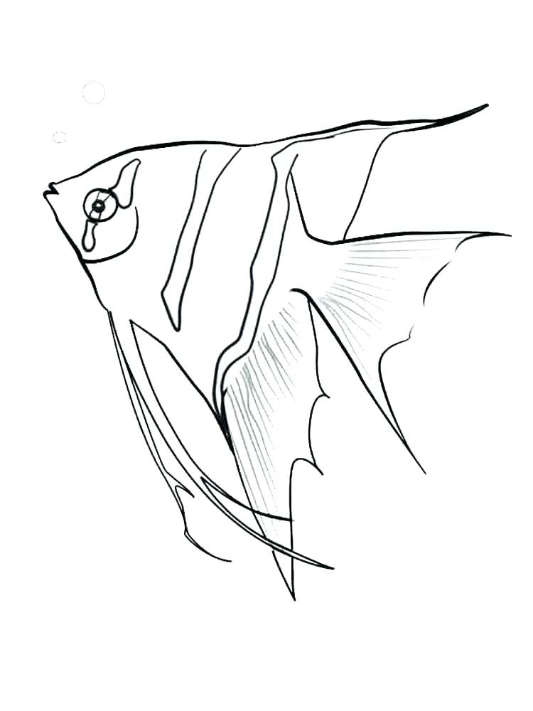 750x1000 Fishing Color Pages Coloring Page Of A Fish Fish Color Pages Angel