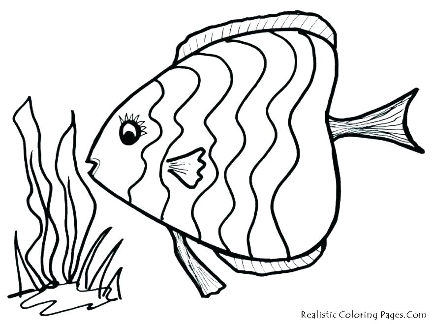 878x659 Realistic Fish Coloring Pages Fish Coloring Pages Lovely Idea