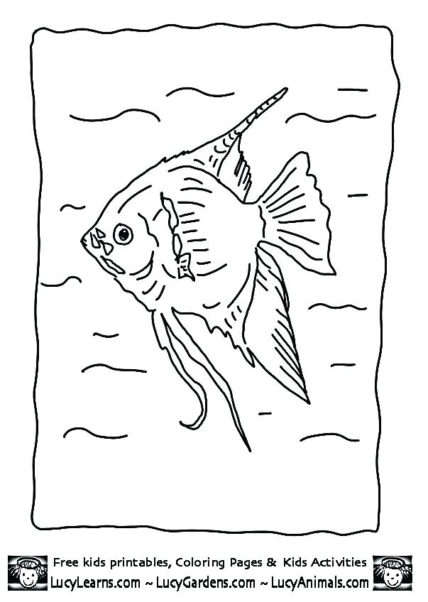 603x848 Angel Fish Coloring Page Angelfish Coloring Page Angel Fish