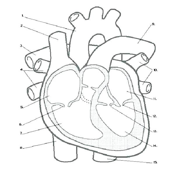 600x600 Heart Coloring Pages With Wings Coloring Pages Heart Human Heart