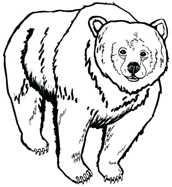 600x650 Grizzly Bear Coloring Pages