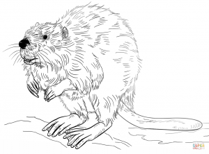 300x222 Angry Beaver For Coloring Page