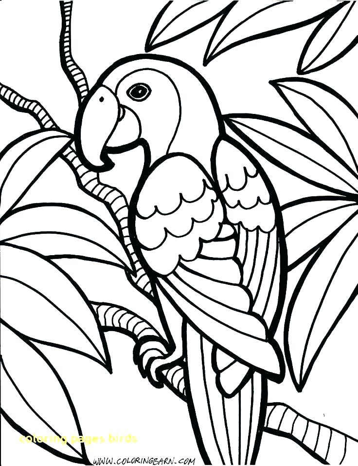 736x957 Angry Birds Coloring Pages Red Bird Angry Coloring Pages Birds