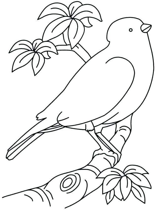 640x853 Printable Birdhouse Plans Printable Coloring Angry Bird Go