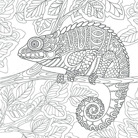 570x570 Coloring Pages Of Animals For Adults Realistic Animal Coloring