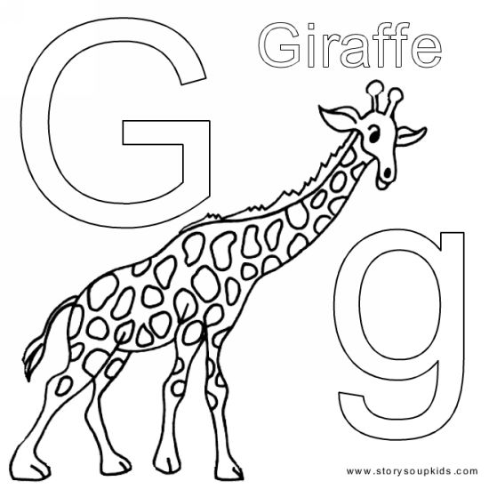 550x550 Animal Alphabet