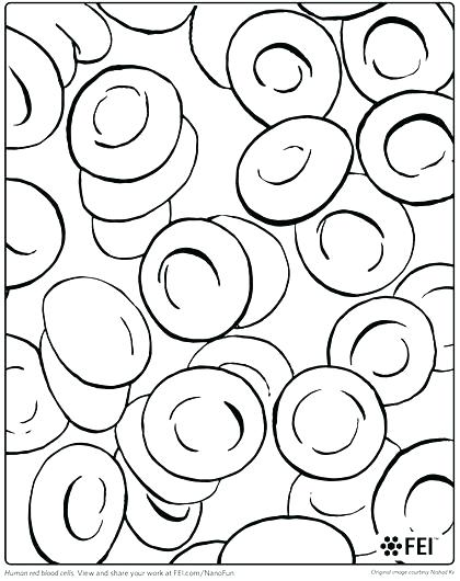420x530 Human Cell Coloring Page Animal Cell Coloring Key Sketch Coloring