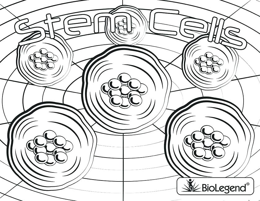838x647 Plant Cell Coloring Sheet Labeled Printable Coloring Plant Cell