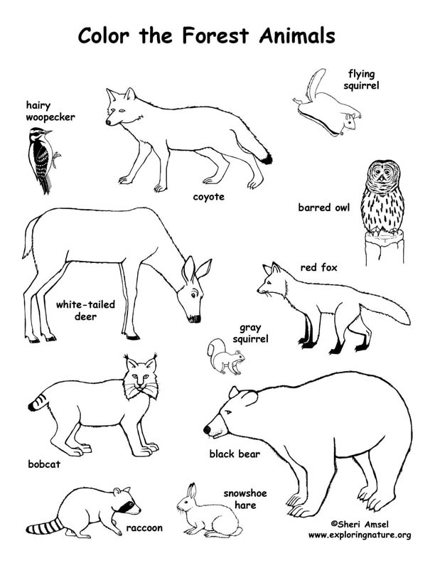 612x792 Forest Animals Coloring Page