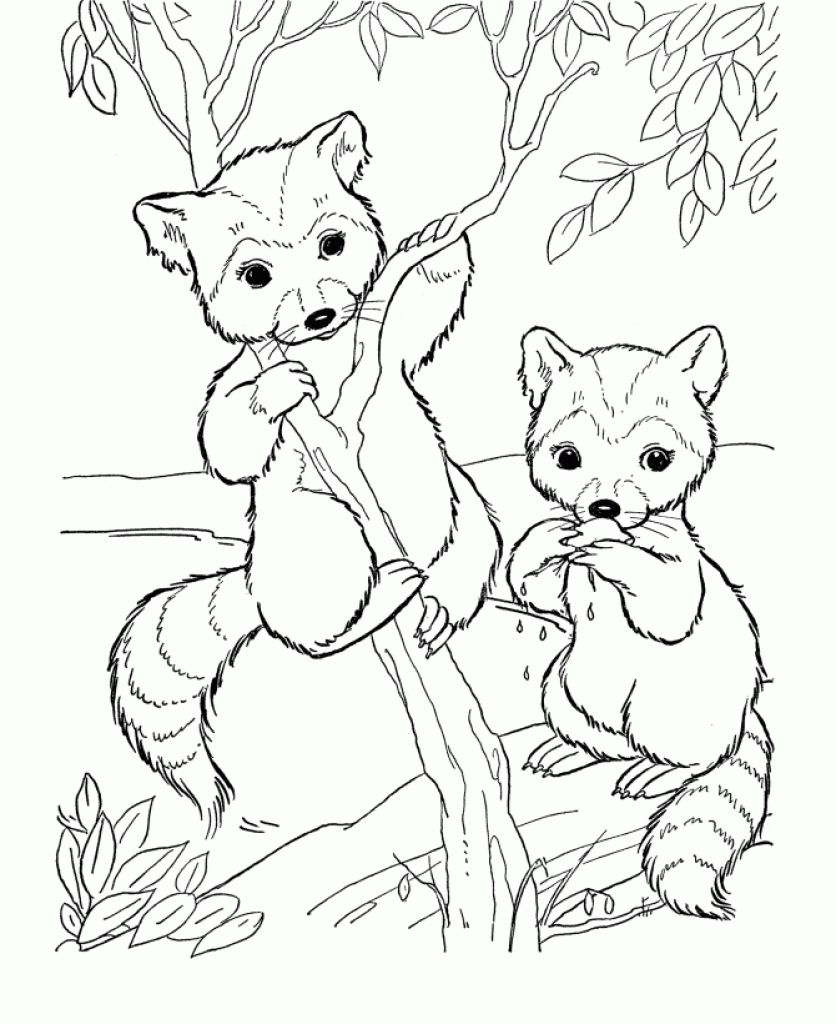 836x1024 New Cute Animal Coloring Pages For Adults Free Raccoon Cartoon
